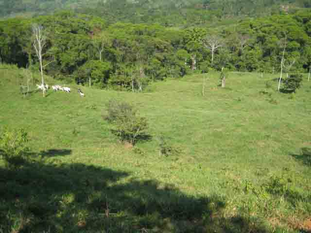 lot for sale, in Platanillo, platanillo real estate, dominical real estate, self sustaining, rolling hills, close to town, beaches, restaurants, super markets, Jungle,
