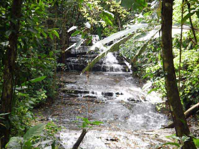Dominical Real Estate, Costa Rica Real Estate, Buyers Agent, Gated self-Sustaining Community, Jungle, Ocean View, Whitewater View, Fire Sale, Waterfalls, Gated,