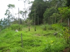 cheap property, near dominical, $33,000, amazing deal, fire sale, platanillo, affordable lots, retirement, investment opportunity, close to San Isidro, hot deal