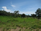 Farm for sale in San Buenas, cortes, commercial property, agriculture, agricultural property, cattle, coastal highway, costanera, palm farm, rice fields, income producing, opportunity, investment, international airport, close to