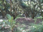 Uvita, walk to the beach, titled property, residential lot, commercial property, location, tourism, for sale, mango trees, hotel, cabinas, rental income, investment opportunity, retirement, near town center, near bank, supermarket, airport, beach, waves,
