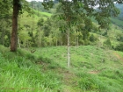 agriculture land, farm for development, away from it all, private, investment, land, farm for sale, large parcel, platanillo, villa bonita, pasture, cattle, views, waterfall, cascade, river, mountain, valley