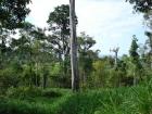 Ocean view farm, near golf course, near airport, waterfall, river view, lot, development parcel, cooler climate pasture, forest, jungle, investment, retirement, power close, access, cortes, san buenas