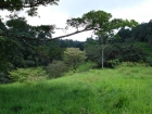 Ocean view farm, near golf course, near airport, waterfall, river view, lot, development parcel, cooler climate pasture, forest, jungle, investment, retirement, power close, access, cortes, san buenas