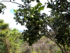 Farm near San Isidro. Perez zeledon, real estate, property, coffee farm, plantation, small community, close to city, peaceful, amazing views, valley, mountain, creek, lights at night, family farm, retirement opportunity