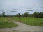 Quepos real estate, commercial property, airport, location, tourism, manuel Antonio, marina, fishing, airplane, property next to airport, close to quepos, for sale, 12 hectares, 29.6 acres