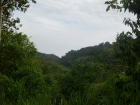 farm for sale, in Lagunas, Lagunas real estate, dominical real estate, self sustaining, rolling hills, close to town, beaches, restaurants, super markets, Jungle, private