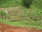 Dominical real estate, land for sale, lot for sale, house for sale, mountain property, secluded, remote, mountain retreat, farm, fruit orchard, community, finished building site