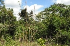 coffee farm for sale, san isidro, perez zeledon, costa rica real estate, fruit farm, 34 acre, bananas, cafe, working farm, farm for sale in san isidro, property for sale in perez zeledon